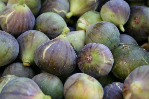 figs-1122197_1920